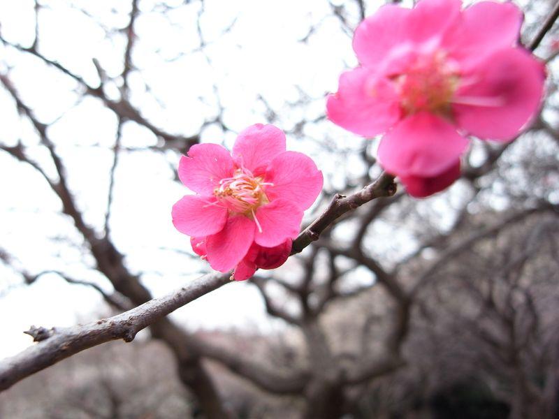 20100214_卯の花_RIMG6906