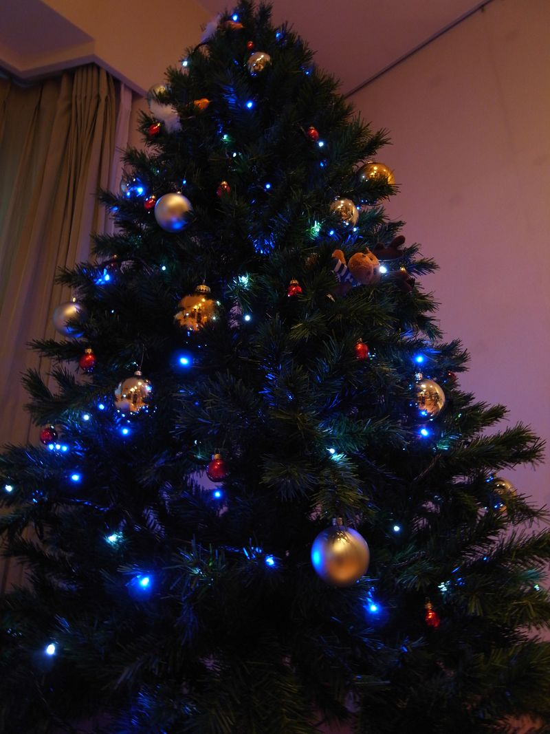 20101121_Christmas tree_R0022627