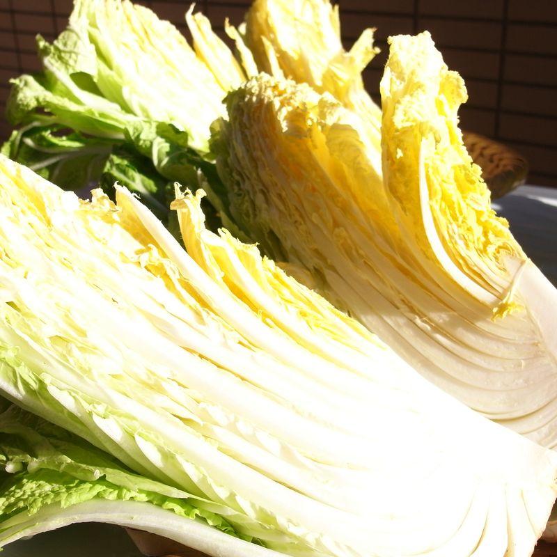 20110124_寒風に白菜をさらしてね_RIMG0387