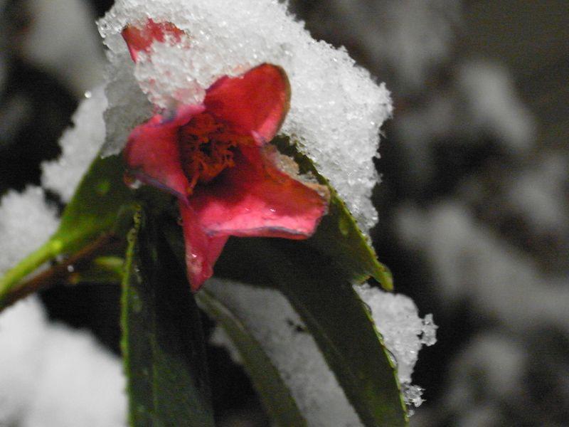 20110214_雪に花に_RIMG0839