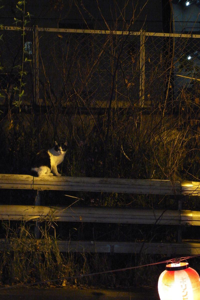 20110413_渋谷を生き抜くにゃん_RIMG1329