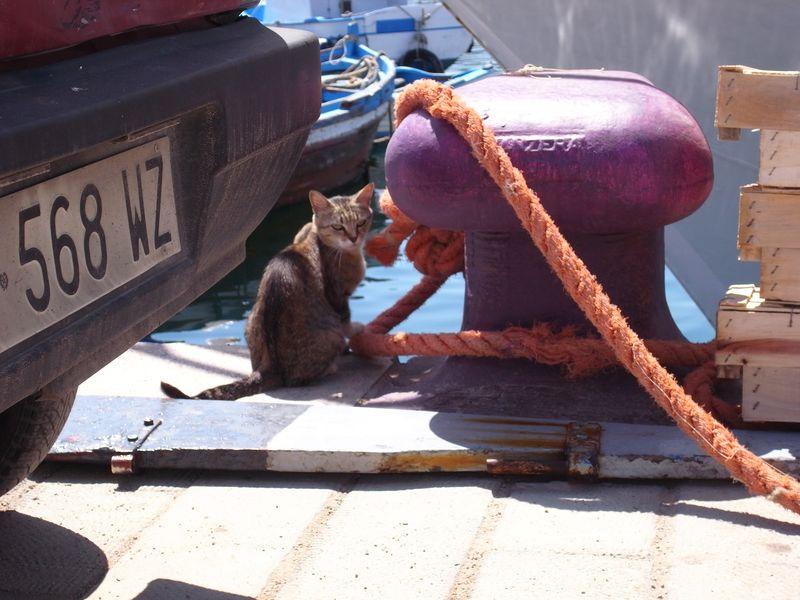 20110728_A palermo, Sicilia - Porto, Mercato della Vucciria8_RIMG2654