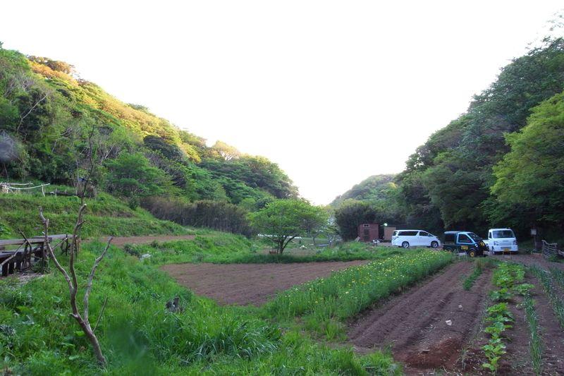 20110501_魔性の畑の夜がはじまる_RIMG1443
