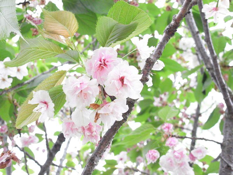 20110517_花鳥風猫_RIMG1482