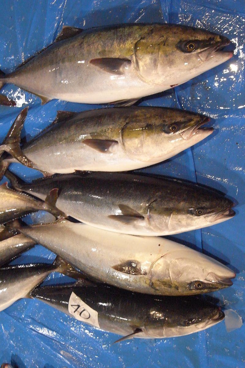 20111225_北の漁場でのセリ_RIMG6006