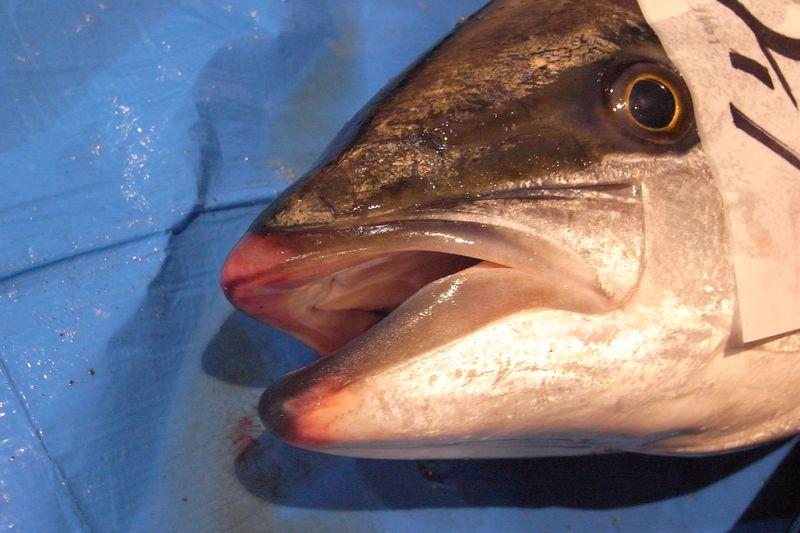 20111225_北の漁場でのセリ_RIMG5995