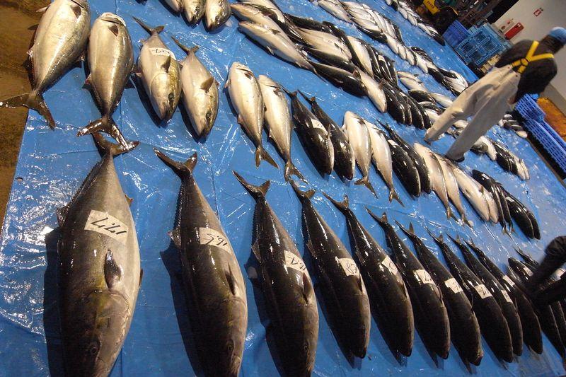 20111225_北の漁場でのセリ_RIMG5990