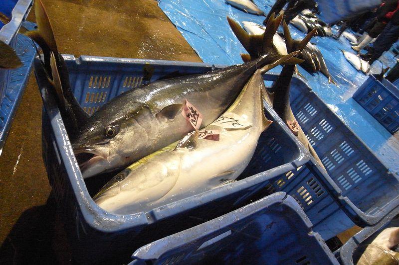 20111225_北の漁場でのセリ_RIMG6062