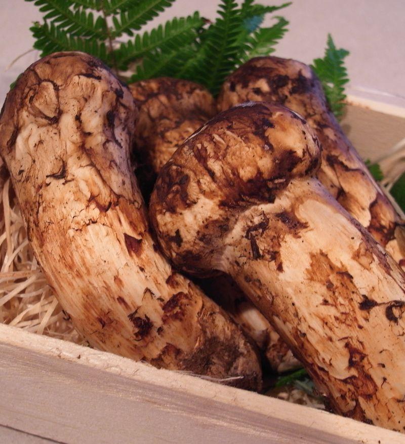 20120923_1020(土)のAL Kitchenは松茸と牡蠣_RIMG4739E