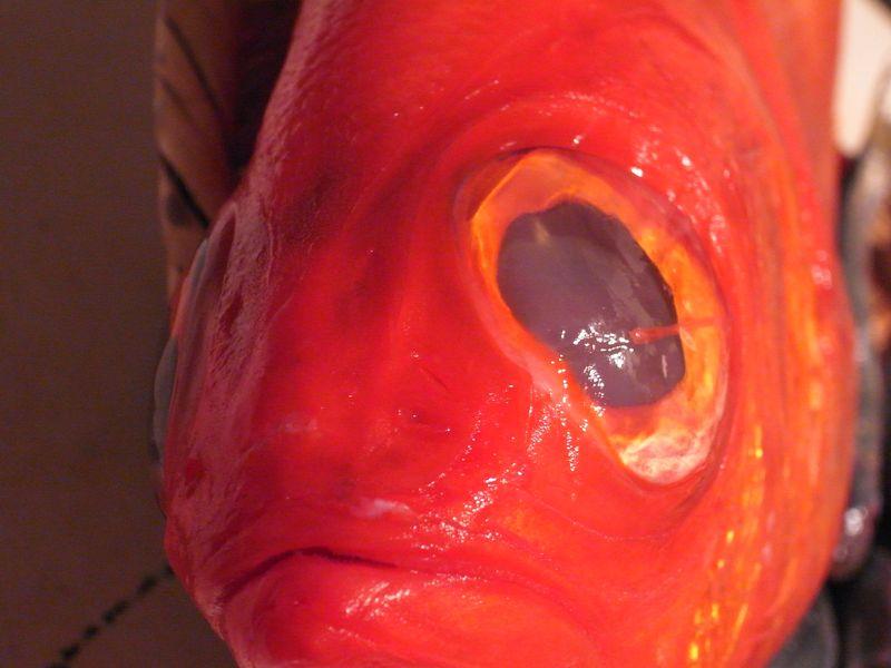 """20121225_120(日)のAL Kitchenは「金目鯛のみぞれ鍋と初春の味""""菜の花""""」_RIMG0530"""