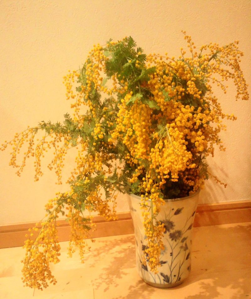 20130310_Il giorno della mimosa_DSC_0574