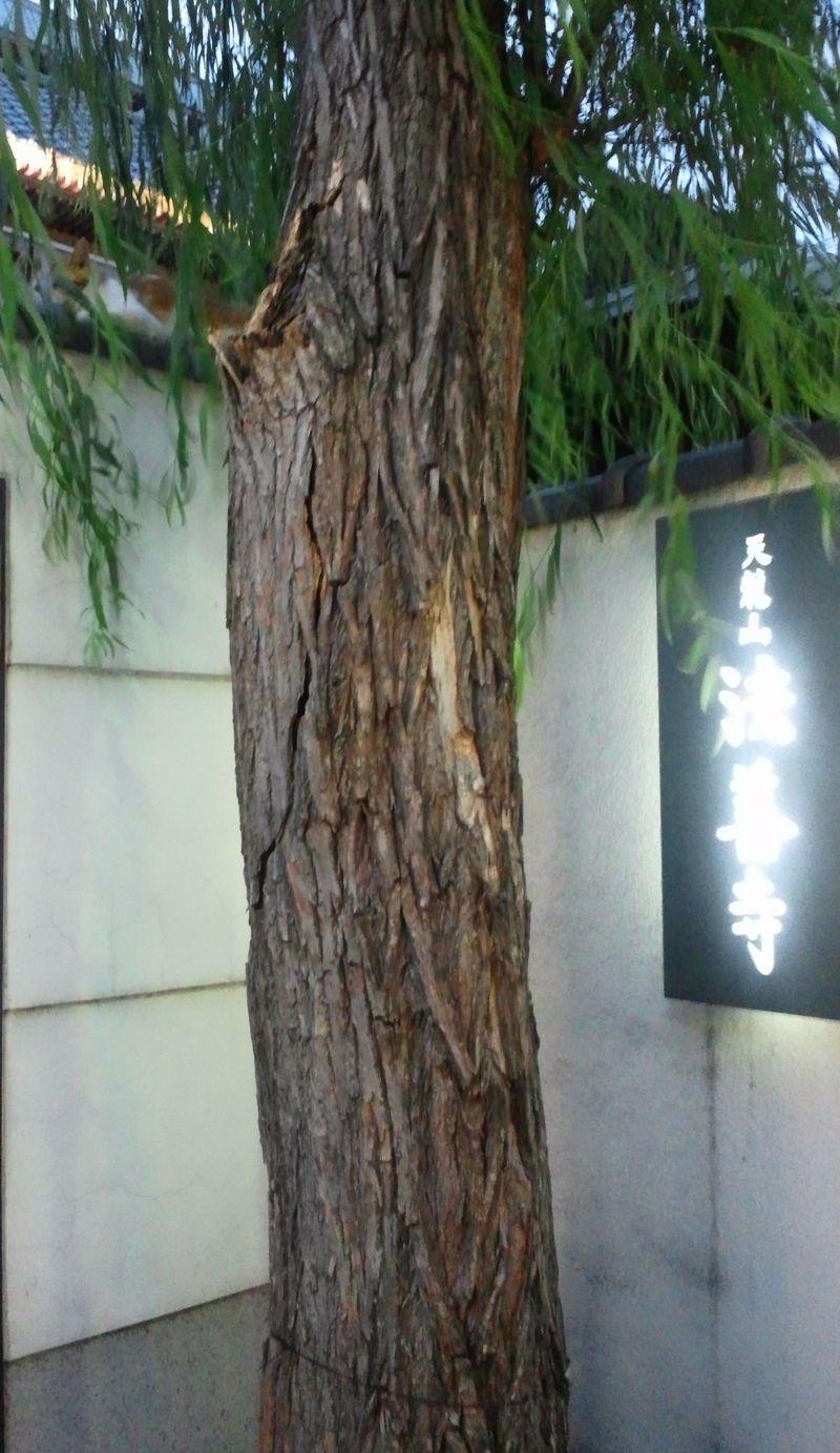 20130716_法善寺横丁とパセミヤ_DSC_1445