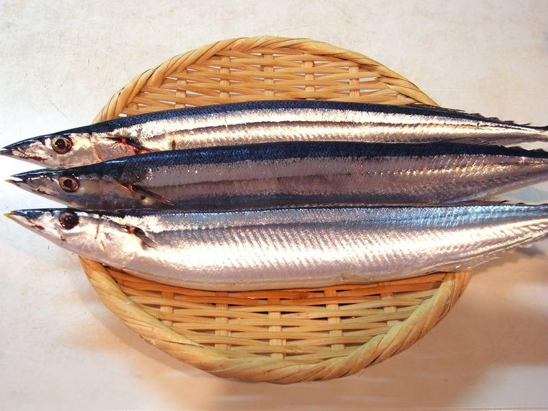 AL20150913_秋刀魚_RIMG2876